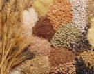 Насіннєвий  та садивний ринок  України поповнено 811 сортами