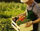 Комітет ВР підтвердив законність поняття «сільськогосподарське підприємство»