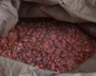 Американська ефективність інокулянтів для кукурудзи, а також сої. Польові досліди «Ензиму»