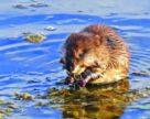 Агрокліматичні умови та проведенні захисні заходи негативно вплинули на розвиток мишоподібних гризунів
