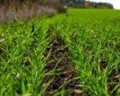 Украинские аграрии открыли февральские окна