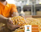 Україна стала лідером поставок кукурудзи до Великобританії
