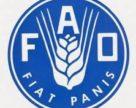 ФАО: світові ціни на м