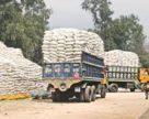 MMTC не добился низких тендерных цен на карбамид для Индии и сократил закупки