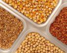 Про що каже імпорт насіння минулих років