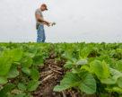 Сільським громадам запропонують гранти на розвиток агросектору