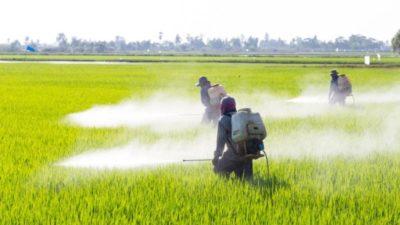Вьетнам запрещает импорт гербицидов с глифосатом