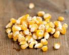 Розпочато сівбу кукурудзи на зерно