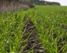 Розвиток хвороб рослин у господарствах