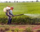 За 5 лет Турция на треть увеличила импорт средств защиты растений