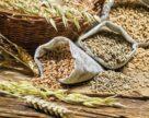 Правила зерновой торговли в России начинают действовать в 2019 году