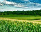 Автономное управление сорняками