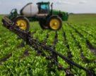 На 50 % посівних площ цукрових буряків Cygnet вже отримано сходи