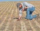 Завдяки ноу-тілл Аргентина втричі збільшила виробництво зерна