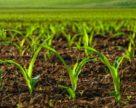 Новое исследование: биопрепараты могут стать необходимостью