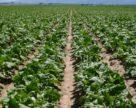 Обладнання для виробництва біоетанолу буде здешевлюватися