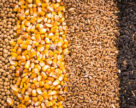 Гены без роялти уменьшают стоимость семян ГМО в Африке