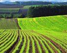 На Вінниччині стихія пошкодила вирощений урожай майже на семи тисячах гектарів
