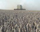 В Украине зерновые обмолочены на половине прогнозируемых площадей