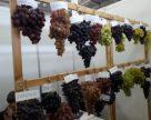 Українське виноробство та виноградарство на краю прірви