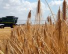 Борьба за урожай 2019: погодное условия тормозят уборочную кампанию в Украине