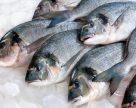 Українські рибалки збільшили вилов в риби в Чорному морі на 84%