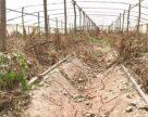 Фермери Закарпаття шукають кошти на відновлення теплиць за кордоном