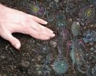 Мікробне «населення» ґрунту