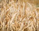 Украина увеличила экспорт зерновых в 1,4 раза