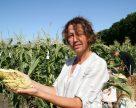 В Україні створено гібрид кукурудзи, який спалює калорії