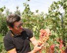 Завдяки народним селекціонерам виноградна зона України змістилася на північ