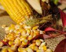 Экспортеров украинской кукурузы ожидает ряд вызовов