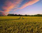 Право оренди сільгоспугідь аграрії України здобувають на електронних торгах