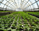 Самая большая проблема тепличного хозяйства Украины