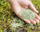 Ученые изобрели технологию повышения всхожести семян трав на 17%