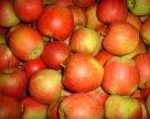 Частка яблук для переробки в ЄС буде найнижчою за останні 5 років