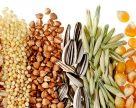 УЗА переглянула прогнози виробництва та експорту зернових та олійний у поточному сезоні