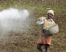 Индия восстанавливает выпуск DAP