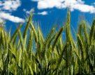 Альтернативний земельний законопроект Лабазюка забороняє купівлю угідь іноземцям