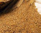Укрепление гривны навредило зерновому экспорту