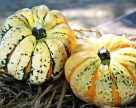 В Украине лидерами органического овощеводства названы бахчевые культуры