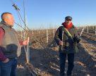 Лісосмуги в Україні можна оновити цінними породами дерев