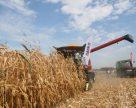 Украинские аграрии убрали зерновые на 80% площадей