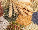 Новый селекционный семеноводческий центр откроют в Томской области