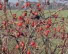 Пільгові кредити на придбання землі українським фермерам не