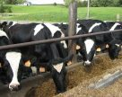 Тваринництво Херсонщини одержало 30 млн грн дотацій