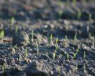 Как обработка семян защищает посевы и экономит деньги