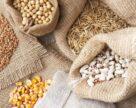 В Крыму произвели 11 тыс. т элитных семян в 2019 г.