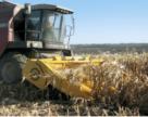 Топ-5  жниварок для кукурудзи, які підкорили українських фермерів