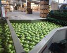 Без сучасної інфраструктури вижити на яблучному ринку неможливо